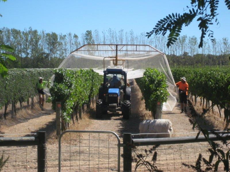 WVC Viticulture Vineyard Maintenance