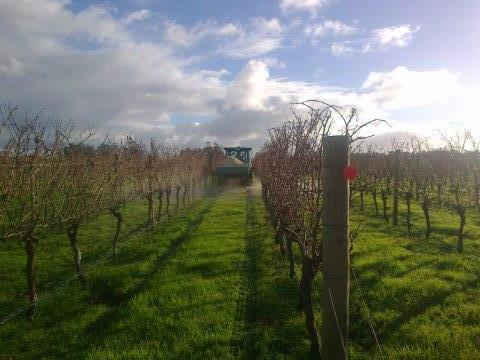 Vineyard Maintenance - Margaret River